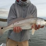 Nice Rockport Texas Redfish