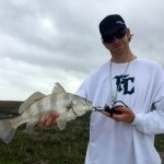 Black drum on the Rockport flats
