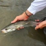 Speckled trout release rockport texas