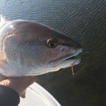Rockport, TX redfish on the fly