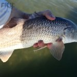 Rockport Texas Redfish Release