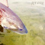 Fly Fish Rockport - Redfish Release