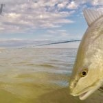 Fishing for Redfish in Aransas Bay