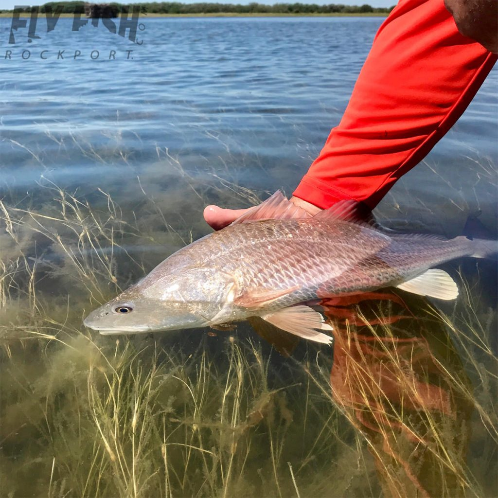Redfish on the Fly in Port O'Connor Texas