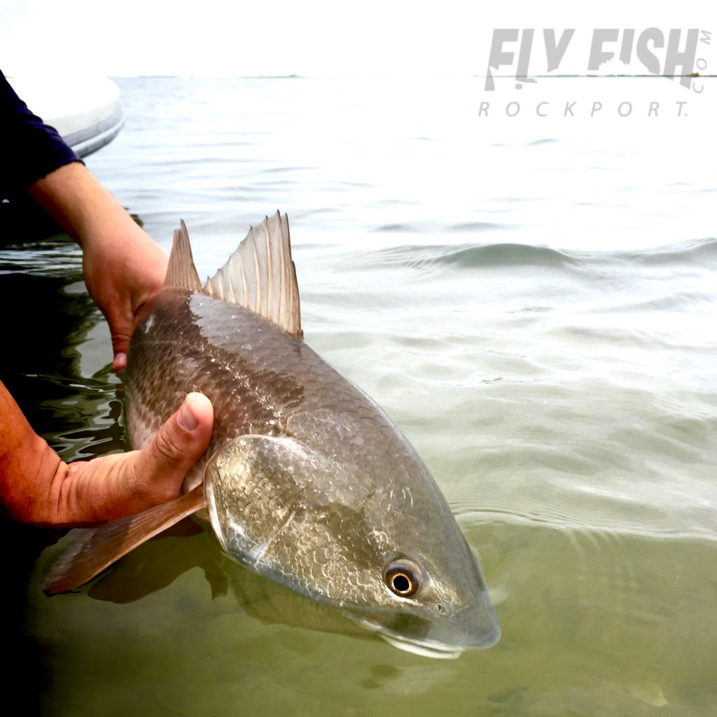 Fly Fishing the Texas Coast
