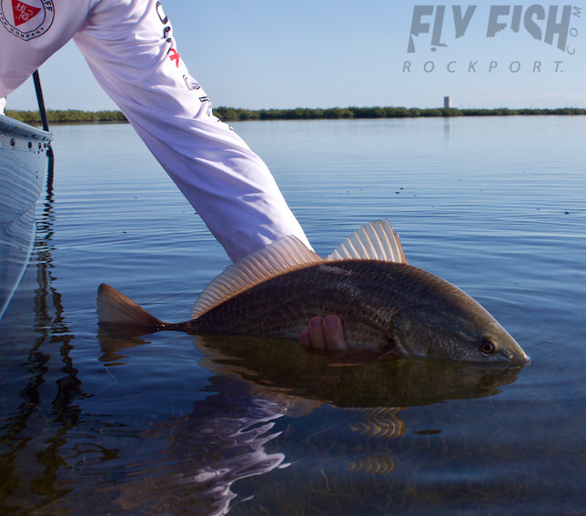 Rockport Fly Fishing in November