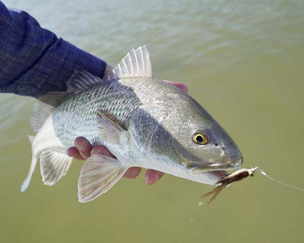 Fly-Fishing-in-Rockport-Texas