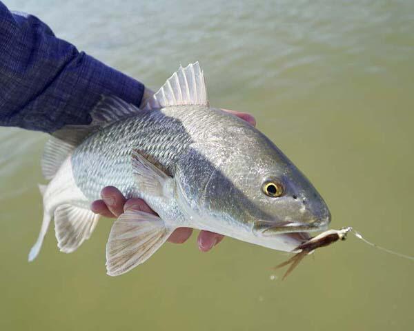 Rockport fishing report november 25th fly fish rockport for Rockport fishing guides