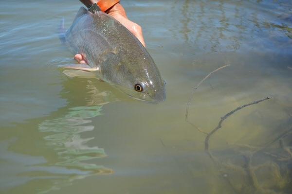 Rockport Flats Fishing for Redfish