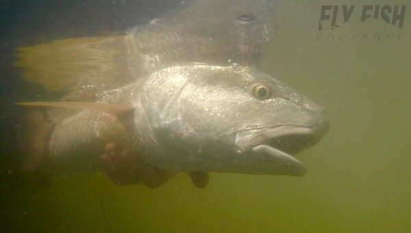 Rockport Fly Fishing Report