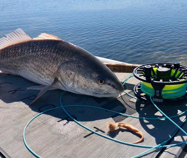 South Texas Redfish