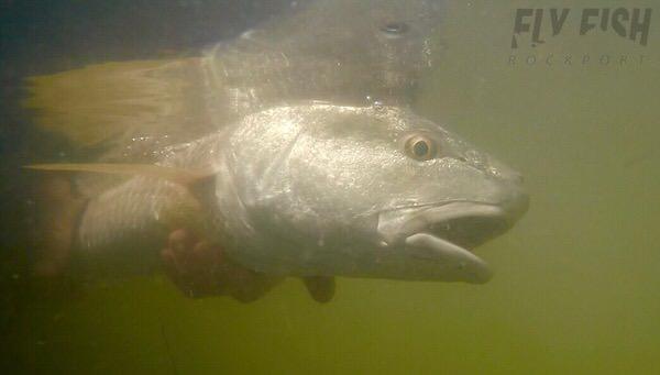 Underwater Redfish