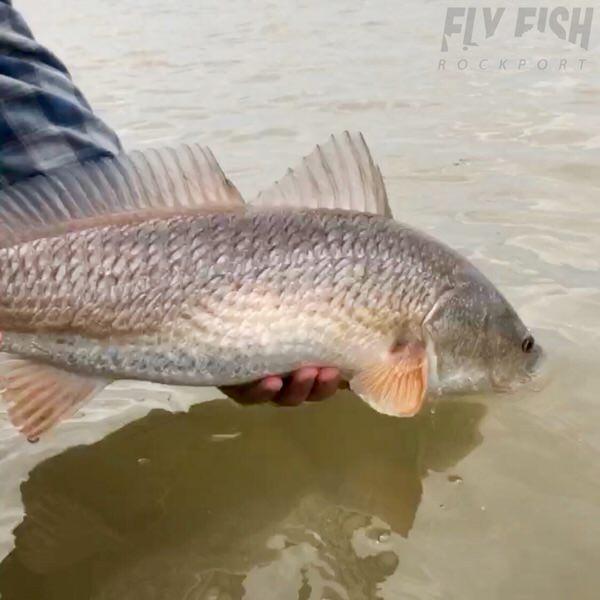 flats fish rockport texas