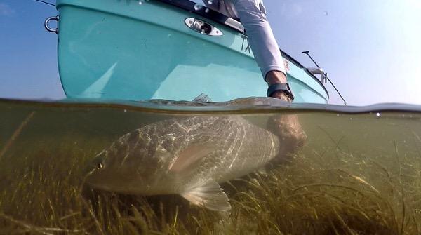 Flats Fish Texas