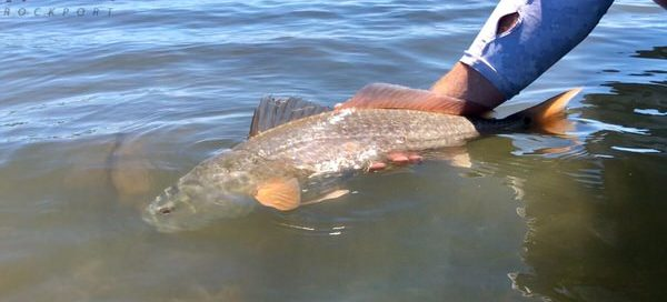 Fly Fishing Report Rockport Texas